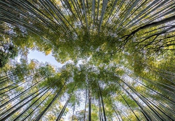 Trætoppe som metafor for vision og værdier